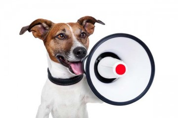 dog with megaphone