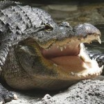 My Interview on Franchise Gator!